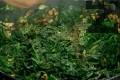 Поставяме целите спаначени листа, след 2-3 мин. поръсваме със сол, захар и девисил.