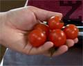 В същото олио запържваме чери доматите, за 4-5 минути които предварително сме прорязали на кръст от долната страна. През това време се пасират продуктите за дресинг.