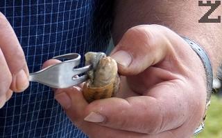 Изчистените охлюви се потапят за две минути и половина в кипяща вода. След това с тризъба вилица се изваждат. Някои ползват клечка за зъби.